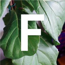 Floyd_designengine_job